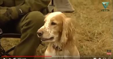 Русский охотничий спаниель (Пермь)